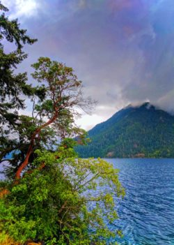 Madrona Tree at Lake Crescent with Clouds Olympic National Park 1