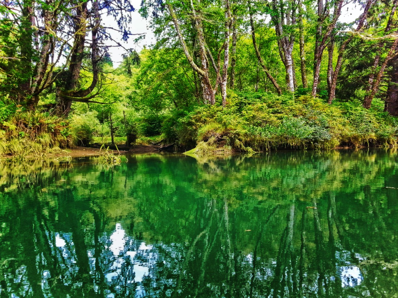 Reflections while Kayaking on Quilute River La Push Olympic Peninsula 1