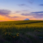 Mt Adams canola field pacific northwest sunsets