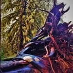Fallen-Tree-Roots-Hoh-Rainforest-Olympic-National-Park-1-150x150.jpg