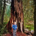 LittleMan-and-Nursery-Stump-Hoh-Rainforest-Olympic-National-Park-1-150x150.jpg