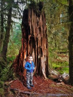 LittleMan-and-Nursery-Stump-Hoh-Rainforest-Olympic-National-Park-1-250x333.jpg