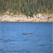 Humpback Whale Hump 2traveldads.com