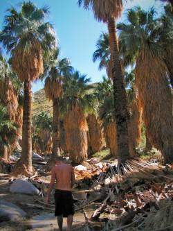 Rob Taylor Palm Springs Canyon 1