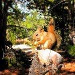 Squirrel-in-Yellowstone-1-150x150.jpg