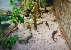 Baby Gators at St Augustine Alligator Farm