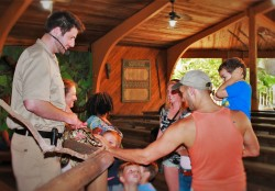Trainer with Python and Rob Taylor at St Augustine Alligator Farm 1