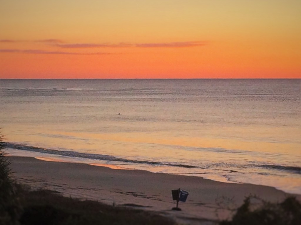 Dolphin in Surf at Sunrise at King and Prince Resort St Simons GA
