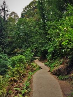 Hiking Trail at Latourell Falls Waterfall Area Columbia Gorege Oregon 2