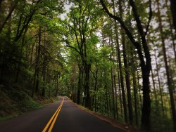 Lush Woods along Historic Highway 30 Columbia Gorge Oregon 2traveldads.com