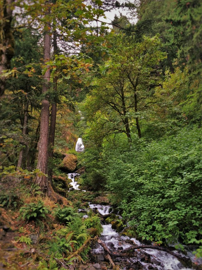 Wahkeena Falls Waterfall Area Columbia Gorge Oregon 1
