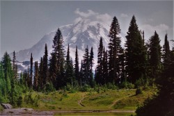 Carbon River Hiking at Mt Rainier National Park 2traveldads.com