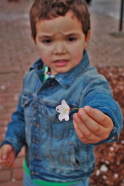 LittleMan and Cherry Blossom in Snoqualamie 2traveldads.com