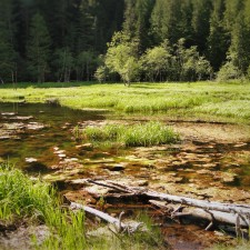 Longmire Marsh Mt Rainier National Park 2traveldads.com