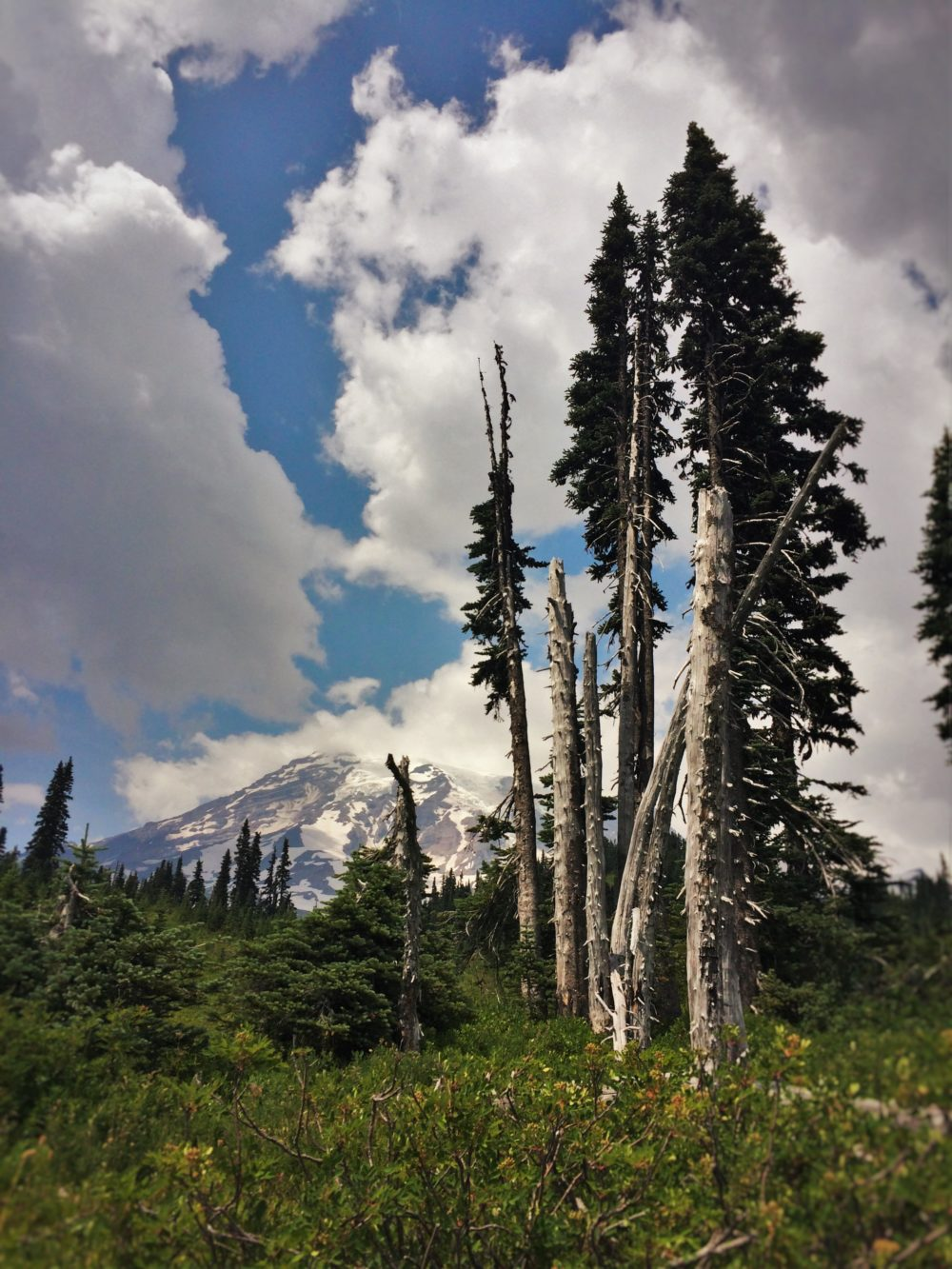 Mountain-View-of-in-Mount-Rainier-National-Park-2-e1497999510816.jpg