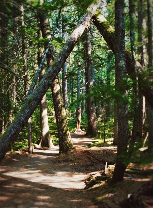Trail of the Shadows Longmire Mt Rainier National Park 2traveldads.com