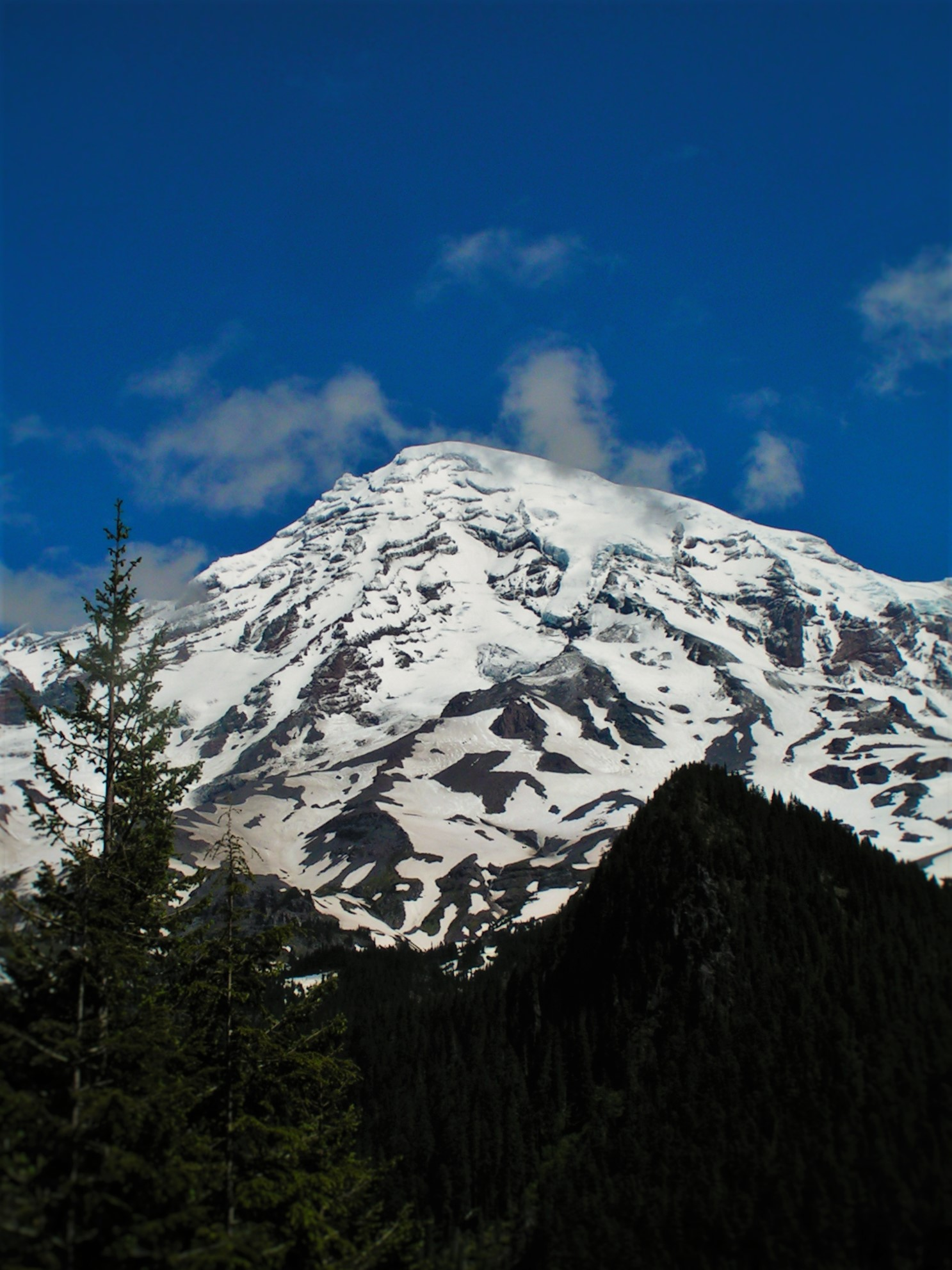View from Longmire in Mt Rainier National Park 2