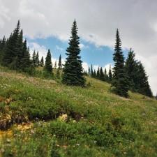 Wildflowers on Hillside in Mount Rainier National Park 2traveldads.com