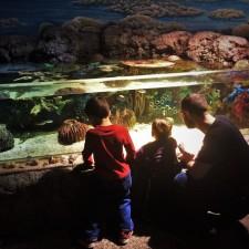 Chris Taylor and Dudes at tropical tank at Denver Downtown Aquarium 4