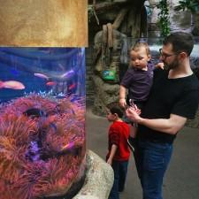 Chris Taylor and Dudes tropical tank Denver Downtown Aquarium 2traveldads.com