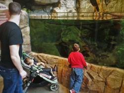 Chris Taylor and Dudes with River tanks at Denver Downtown Aquarium 1
