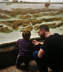 Chris Taylor and LittleMan with coastal tidepool at Denver Downtown Aquarium 1
