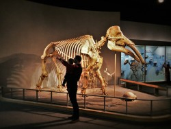 Chris Taylor and TinyMan in Prehistoric Journey in Denver Museum of Science and Nature 2