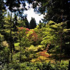 Japanese Garden with reflections at Bloedel Reserve Bainbridge Island 1