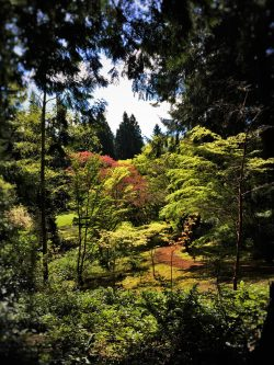 Japanese Garden with reflections at Bloedel Reserve Bainbridge Island 1