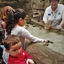 LittleMan Touch tank Denver Downtown Aquarium 2traveldads.com