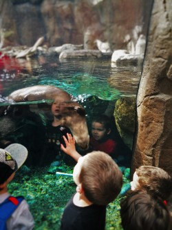 LittleMan and Friends with River Otter at Denver Downtown Aquarium2