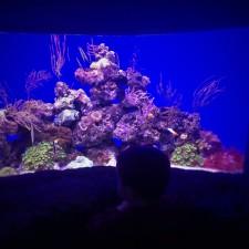 LittleMan and tropical tank at Denver Downtown Aquarium 1