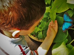 LittleMan being still for a butterfly at the Butterfly Pavilion Denver Colorado 3