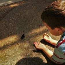 LittleMan being still for Butterfly at Butterfly Pavilion Denver 2traveldads.com