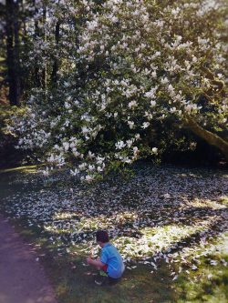LittleMan collecting Magnolia petals at Bloedel Reserve Bainbridge Island 1