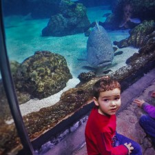 LittleMan in Shark Tube at Denver Downtown Aquarium 1