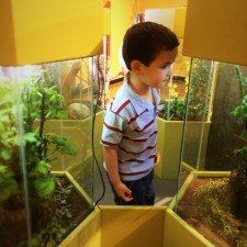 LittleMan looking at Bug Tanks at the Butterfly Pavilion Denver Colorado 1