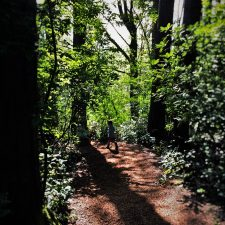 LittleMan on Shadowy Trail at Bloedel Reserve Bainbridge Island 1