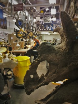 Paleontologists working in Denver Museum of Science and Nature 2