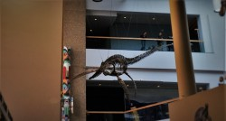 Plesiosaur in Entry in Denver Museum of Science and Nature 1