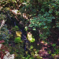 Rhododendron Waterfall at Bloedel Reserve Bainbridge Island 1