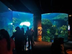 Shipwreck area at Denver Downtown Aquarium 1