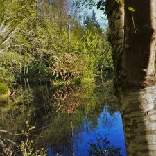 Still Pond with Reflections at Bloedel Reserve Bainbridge Island 2