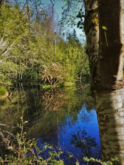 Still Pond with Reflections at Bloedel Reserve Bainbridge Island 2