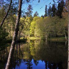 Still Pond with reflections at Bloedel Reserve Bainbridge Island 4