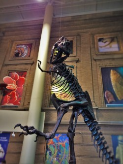 T-Rex in entry of Denver Museum of Science and Nature