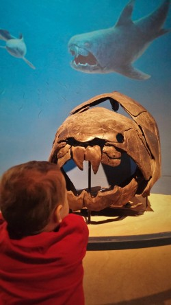 TinyMan and Megaladon Fossile at Denver Museum of Nature and Science 1