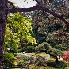 Trees in Japanese Garden at Bloedel Reserve Bainbridge Island 1