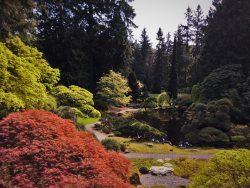 Trees reflecting on still pond in Japanese Garden at Bloedel Reserve Bainbridge Island 2