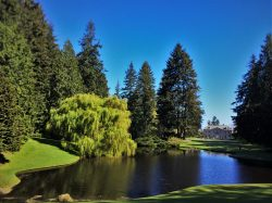 Weeping Willow with Pond and Mansion at Bloedel Reserve Bainbridge Island 2